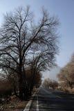 Trockener Baum neben Straße lizenzfreie stockfotos