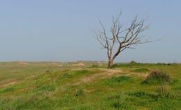 Trockener Baum am Rand des grasartigen Hügels im Frühjahr Lizenzfreies Stockfoto