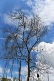 Trockener Baum tot lizenzfreie stockfotos