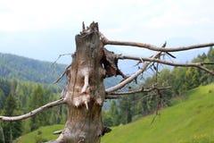 Trockener Baum tot in den Bergen Lizenzfreie Stockfotografie