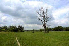 Trockener Baum und der Weg unter einem bewölkten Himmel Lizenzfreies Stockfoto