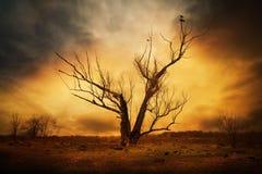 Trockener Baum und Krähen auf den Niederlassungen Stockfotos