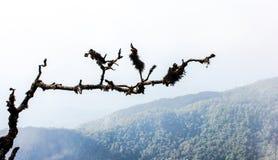 Trockener Baum und trockener MOS Stockbild
