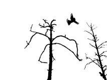 Trockener Baum und Vögel des Schattenbildes Stock Abbildung