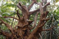 Trockener Baum unheimlich lizenzfreie stockbilder