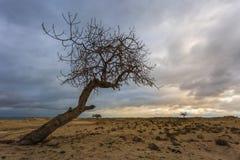 Trockener Baum, vor dem Sturm Stockbild