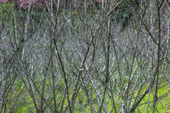 Trockener Baumhintergrund der Niederlassung Stockbilder