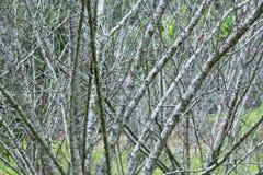 Trockener Baumhintergrund der Niederlassung Stockfotos