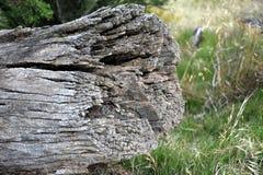 Trockener Baumstamm mit vielen Sprüngen Stockbild