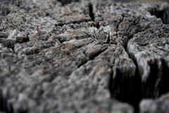 Trockener Baumstamm mit vielen Sprüngen Lizenzfreie Stockfotografie