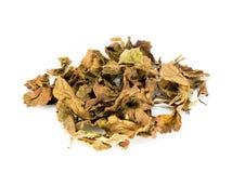 Trockener Blatt-Tee stockfotos