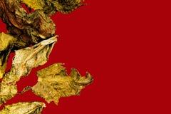 Trockener Blatttee sind milchiges oolong Makro auf einem roten Hintergrund lizenzfreie stockbilder