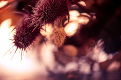 Trockener Blumenhintergrund Stockbild
