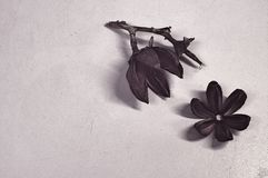 Trockener Blumenhintergrund Stockbilder