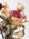 Trockener Blumenstrauß Stockbilder