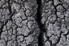 Trockener Boden Stockfotos