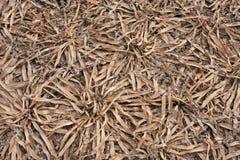 Trockener Boden des getrockneten-oben Reservoirs mit einem Satz Büschen von Algen lizenzfreie stockbilder