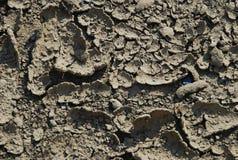 Trockener Boden des Sprunges Stockbild