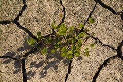 Trockener Boden mit Sprüngen Stockbild