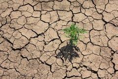 Trockener Boden und Unkraut Lizenzfreie Stockfotos