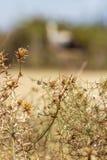 Trockener dorniger Busch mit kleinen Schnecken, eine unscharfe Form eines europäischen weißen Storchs im Hintergrund stockfotos