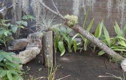 Trockener Garten Lizenzfreies Stockbild