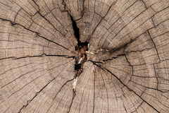 Trockener gebrochener Baum Stockbild