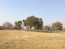 Trockener grasartiger Boden mit klarem blauem Himmel lizenzfreies stockbild