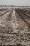 Trockener Gutshof in der Jahreszeit der Dürre Lizenzfreie Stockfotografie