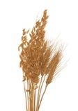 Trockener Hafer und Weizen getrennt auf Weiß stockbilder