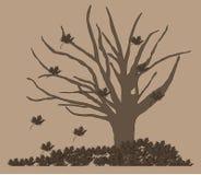 Trockener Herbstbaum Stockfotos