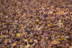 Trockener Herbstlaub im Park Stockfoto
