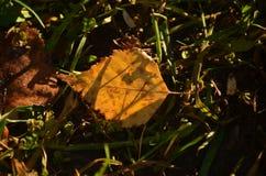 Trockener Herbstlaub mit Grasschatten stockfoto