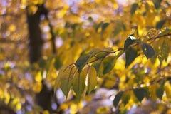 Trockener Herbstlaub und Baum Stockfoto