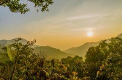 Trockener immergrüner Wald im Nationalpark stockfotografie