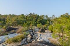 Trockener immergrüner Wald und Geografie lizenzfreie stockfotografie