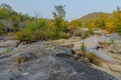 Trockener immergrüner Wald und Geografie stockfotografie