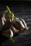 Trockener Knoblauch Stockfoto