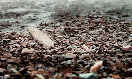 Trockener Libellenflügel in den trockenen Seekieseln Stockfotografie