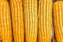 Trockener Mais Lizenzfreie Stockbilder