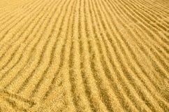 Trockener Reis lizenzfreies stockfoto
