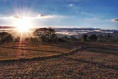 Trockener Reispaddy morgens mit Sonnenaufgang lizenzfreies stockfoto