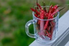 Trockener roter Pfeffer in einem Glasgefäß Lizenzfreie Stockfotografie