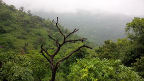 Trockener Stamm umgeben durch Grün Stockfotografie