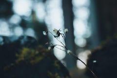 Trockener Stiel einer Anlage im Wald, während eines Spaziergangs, tiefer Herbst Lizenzfreies Stockbild