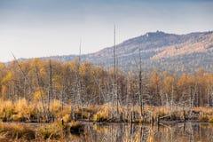 Trockener Stumpf, der im See steht Lizenzfreie Stockfotografie