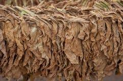 Trockener Tabak stockbild