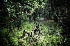Trockener Teich mit Knien der kahlen Zypresse im Südwesten Florida lizenzfreie stockfotos