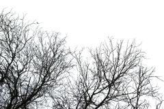 Trockener Todesbaum lokalisiert auf Weiß Stockfotografie