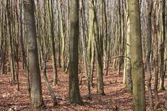 Trockener Wald Stockbild